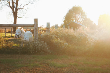 White Donkey in a Field on a Sunny Autumn Day