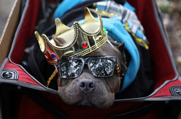 The 28th Annual Tompkins Square Halloween Dog Parade