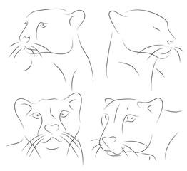 Black and white hand drawn linear sketch of cheetah heads. Cheetah - Acinonyx jubatus. Vector
