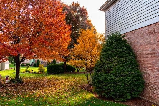 Suburban Home Backyard Garden during Autumn
