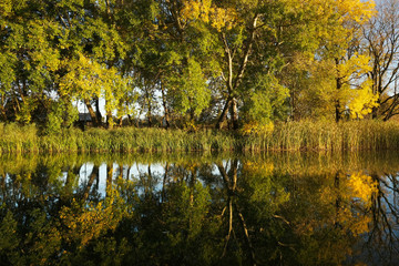 Obraz Symetryczne odbicia jesiennych drzew w wodzie w zachodzącym słońcu - fototapety do salonu