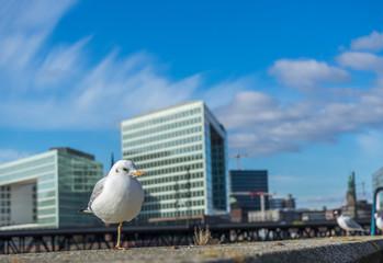 Möwe vor Panorama Hamburg Speicherstadt steht auf einem Bein