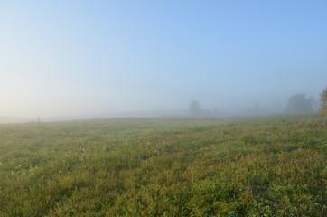 Morning fog, meadow