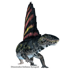 Dimetrodon Reptile on White with Font