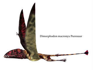 Dimorphodon Reptile Side Profile with Font