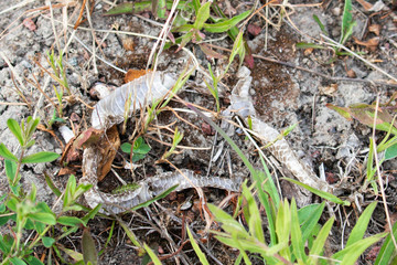 Snake skin, possibly of the common viper, blends in at Kökar, a municipality of the Åland Islands, Finland.