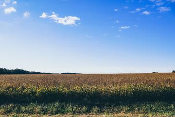farm field and blue sky