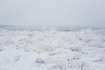 Winter landscape. Frozen meadow flower