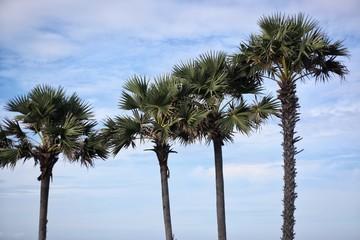 four palm trees against a blue sky.