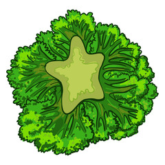 Broccoli cabbage icon. Cartoon of broccoli cabbage vector icon for web design isolated on white background