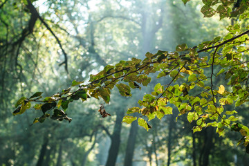 soft focus outdoor park tree branches and leaves in morning fresh time and sun light rays background