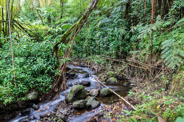 Stream running through tropical rainforest, in Akaka Falls State Park, Hilo, on Hawaii's Big Island. Rocks in stream; bamboo, ferns, vines and other jungle plants.