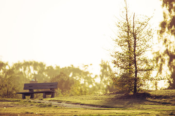 single Park Bench in the afternoon Light