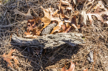 Wood and pine cone in dead leaves on the floor of the woods.