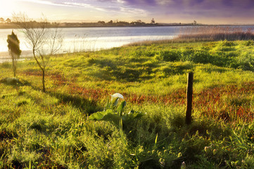 Green grass, a river, trees, a white flower, a wooden pole and the sky lit by sunlight