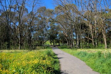 Pathway through to a river in Lilydale, Victoria, Australia.