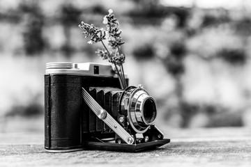 Vintage Kamera steht auf dem Tisch mit Sträußchen Lavendel und umgeben von Herbstlaub in schwarz-weiß