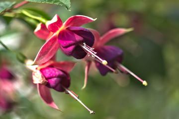flores del jarín
