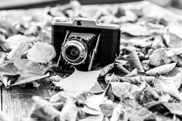 Schöne analoge Kamera mit Balken und brauner Schutzhülle liegt zwischen bunten Blättern  in schwarz-weiß