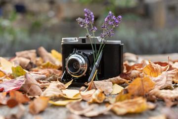 Vintage Kamera mit Sträußchen Lavendel und umgeben von bunten Herbstlaub