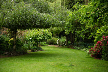 View of lush green garden with willow tree, green lawn, no sky and no body in garden