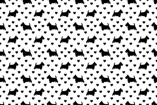 A seamless pattern of Scottish Terriers and hearts. The cute white 'Scottie' dogs are scattered with the symbol of love over a black background.