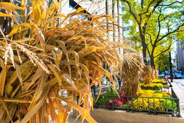 Autumn Display of Cornstalks along Michigan Avenue in Chicago