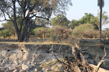 Zambezi riverbank