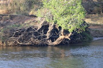 Zambezi riverbank