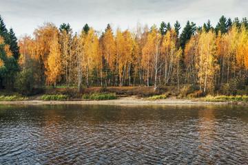 Autumn forest lake reflection landscape