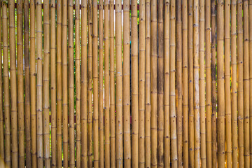 Nature bamboo fence