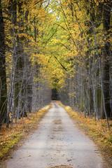 Street with autumn foliage tunnel