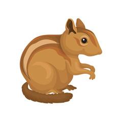 Chipmunk wild rodent animal vector Illustration on a white background