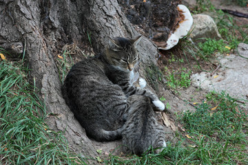 homeless cat hugging her kitten