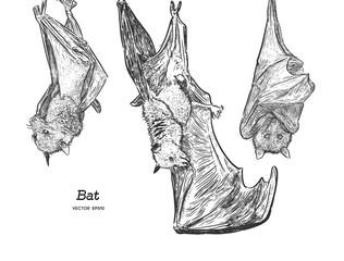 Bat illustration, drawing, engraving, ink, line art, vector