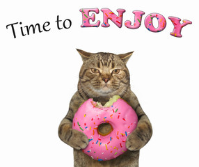 The cat eats a pink doughnut. Time to enjoy. White background.