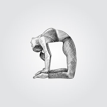 Hand drawn woman practicing yoga, stretching in Ustrasana exercise. Vector illustration of yoga pose in sketch style isolated on white background.