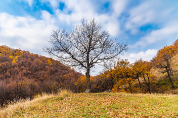 A tree with bare branches and a cloudy sky and mountains with autumn forest in the background