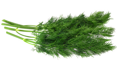 bunch fresh green dill isolated on white background