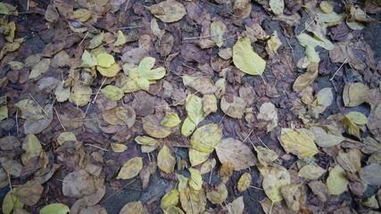 Hojas de otoño caídas y húmedas