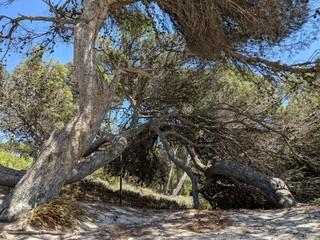 Baum im Sandboden