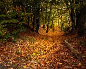 Autumn woodland trail, Woodbury Hill Fort, Devon, UK