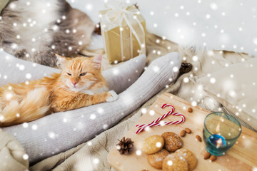 Fototapete - pets, hygge and christmas concept - red tabby cat lying on owner feet with gift, oatmeal cookies and candle at home over snow