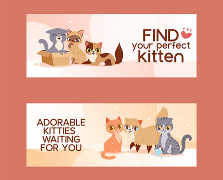Pets adopt find friendship poster vector illustration. Love kitten and cat adoption banners.