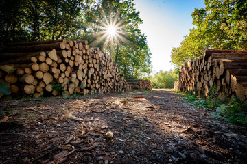 Forestry Industry, Stacked logs. Autumnal woodland Background.