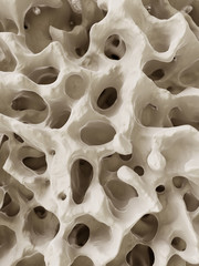 3d rendered illustration of the human bone structure