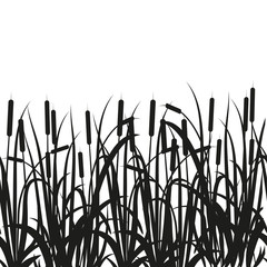 Sedge, reed, cane, bulrush. Black silhouette on white background.