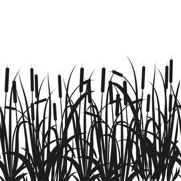Sedge, reed, cane, bulrush. Black silhouette on white background.