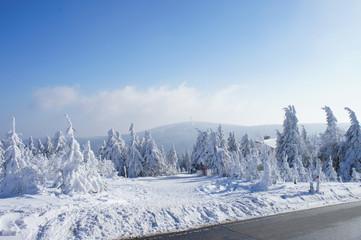 Winterlandschaft / Wanderer auf dem Fichtelberg im Erzgebirge, Blick zum Klinovec in Tschechien, dick verschneite Fichten, blauer Himmel und Wolken
