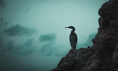 colorful sunset bird on the ibiza rocks